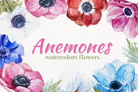 Anemones Flower Set