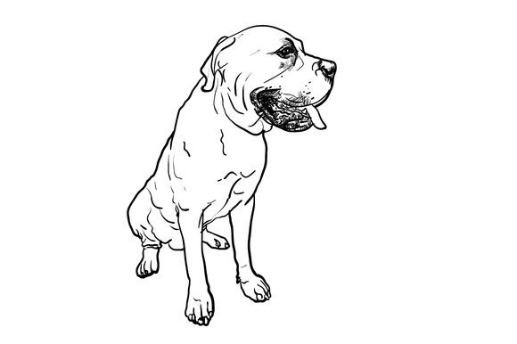 Drawing Of Mastiff Dog