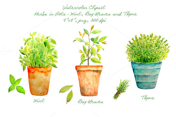 Watercolor Herbs In Pots