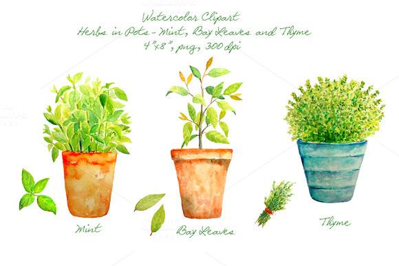 Watercolor Herbs In Pots