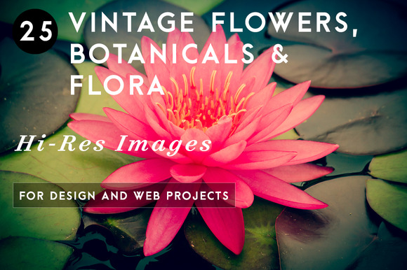 Vintage Flowers Botanicals Flora