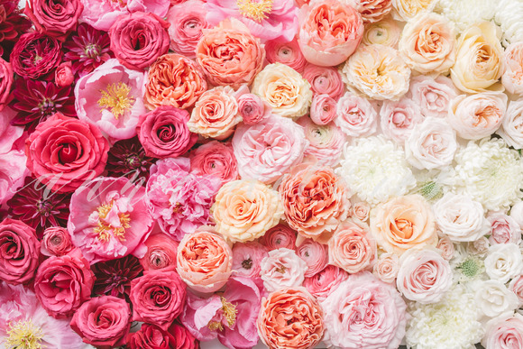 Styled Stock Photo Ombre Flowers