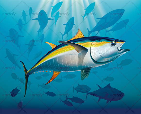 Yellowfin Tuna Swimming In The Depth