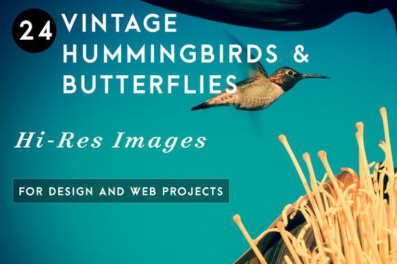 Vintage Hummingbirds Butterflies