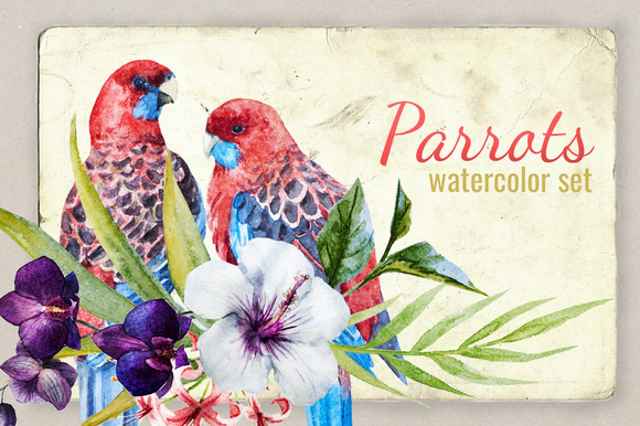 Watercolor Set Tropical Parrot