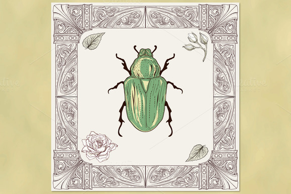 Rose Chafer Beetle And Ornate Frame