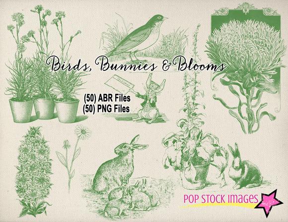 Birds Bunnies Blooms Brushes Set