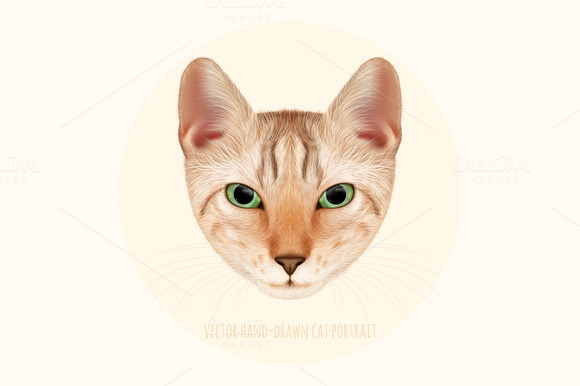 Cat Face Portrait