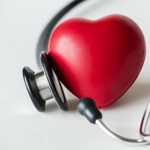Print our Lupus and the Heart, Lungs and Blood fact sheet