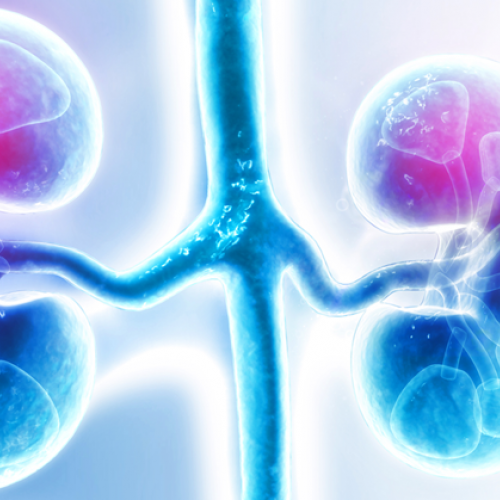 Print our Lupus and the Kidneys fact sheet