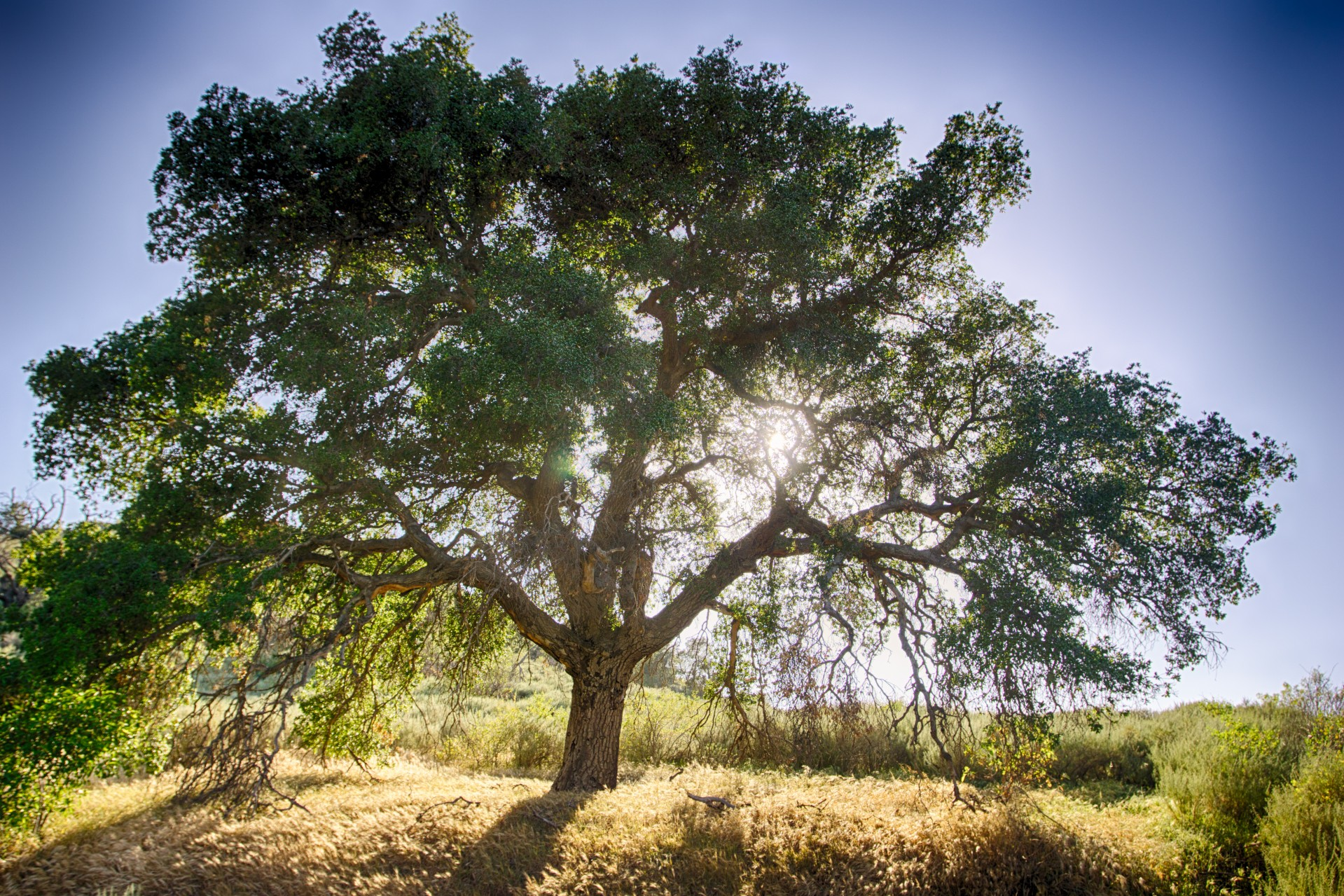 Didyouknow the evaporation from a large oak or beech tree is from