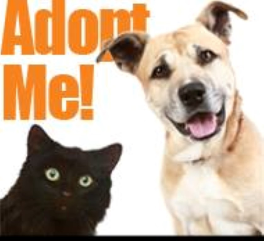 walter o brien friends and pet adoption events on pinterest
