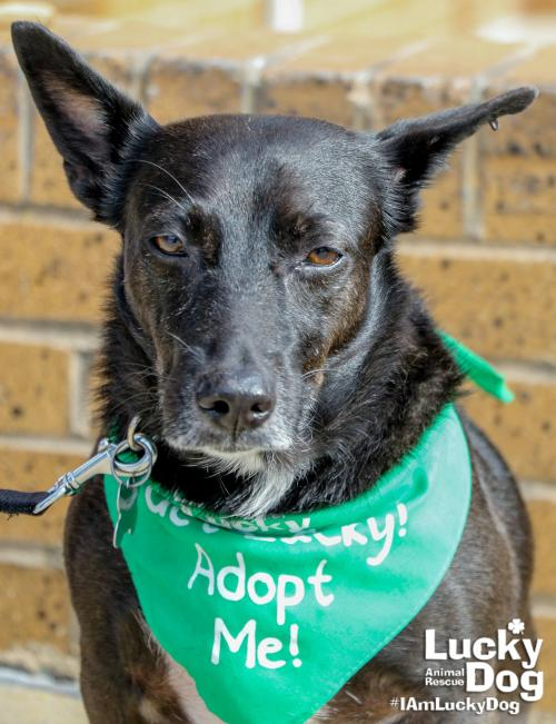 Adopt Lucky Dog Animal Rescue
