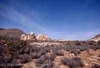 Joshua Tree National Monument CA Apr 1971-29