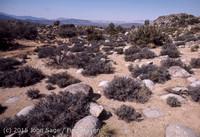 Joshua Tree National Monument CA Apr 1971-31