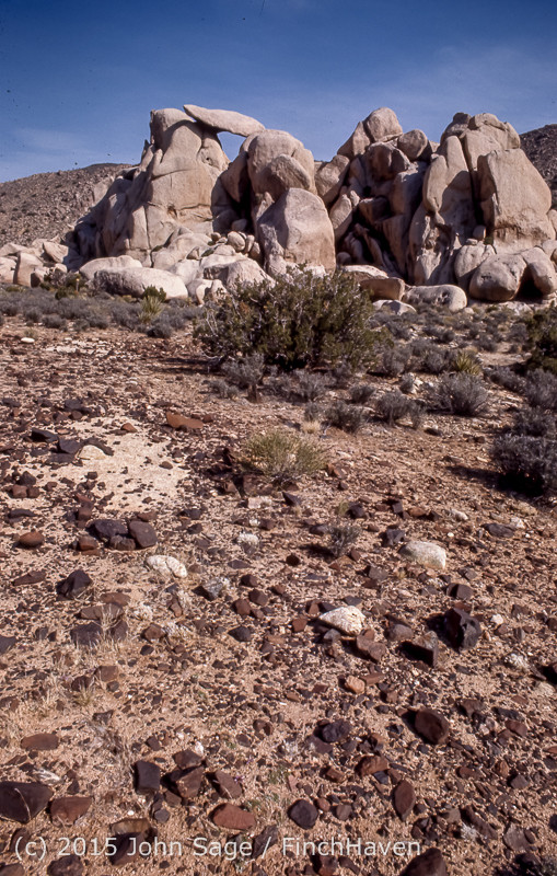 Joshua_Tree_National_Monument_CA_Apr_1971-33