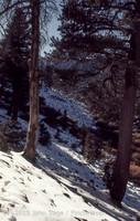 Mount San Gorgonio CA 1972-08
