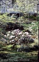 Japan Trip April 1984 b09 279