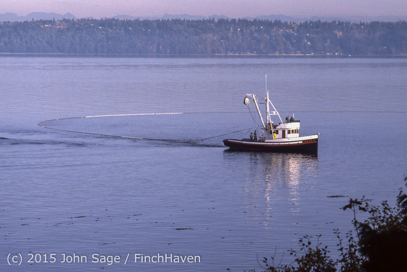 Purse-seining Salmon Glen Acres Vashon WA 1980 008
