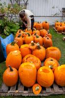 8476 VHS Football guts pumpkins 101913
