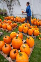 8478 VHS Football guts pumpkins 101913