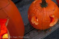 8986 Pumpkin Lighting at the Vashon Roasterie 102713