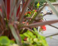 9795 Vashon Strawberry Festival 2013 Wednesday Walkabout 071713
