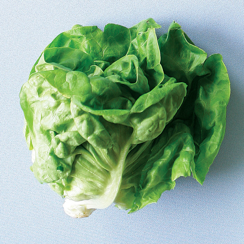 grilled butter lettuce with buttermilkchive dressing