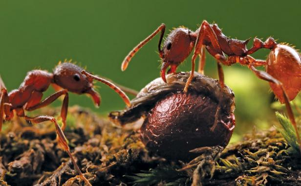 I Have Red Ants In My Garden Garden Ftempo