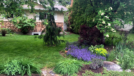 Low maintenance alternatives to lawns finegardening for Low maintenance shade garden