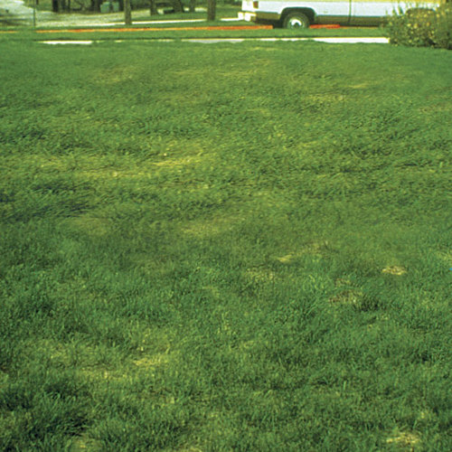 Lawn Talk Springtime Blotchiness May Be A Symptom Of