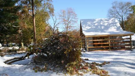 This was our beloved hydrangea Saturday after the heavy, wet snow leveled trees and power lines throughout our town. The local utility says that 90% of customers were without power. We're still expected to be without power a week later.
