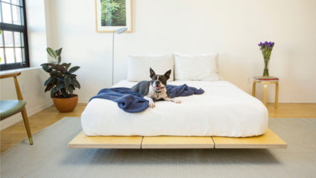 floyd-bed-lifestyle_dog