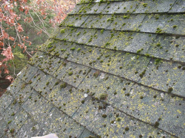 After just 16 years lichen and moss have taken hold on the surface of the asphalt roof shingles on the north side of the house & Lichen and Moss Roof Remediation - Fine Homebuilding memphite.com