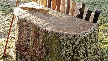 011223098_01_lumber-log