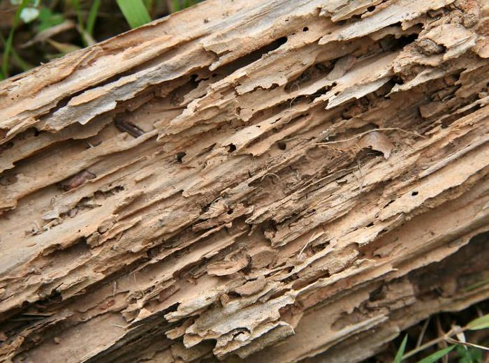 Article Image. How to save your wood from termites on your own   FineWoodworking