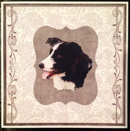 Card Gallery - Border Collie Head