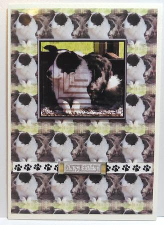Border Collie pyramid with background in Card Gallery