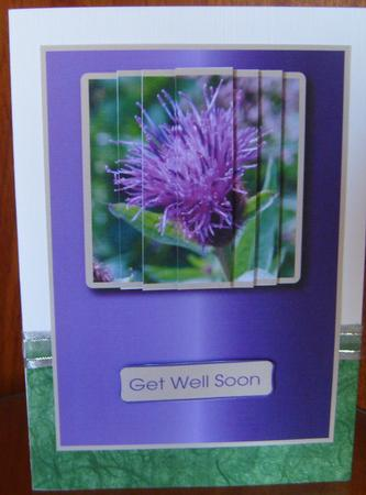 Card Gallery - Thistle flower