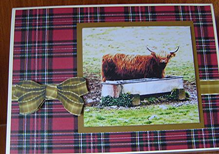 Highland Cow in Card Gallery