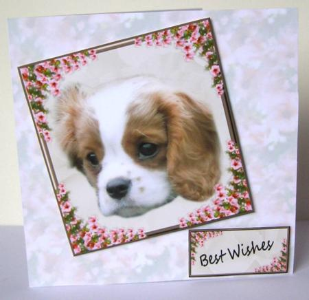 Card Gallery - Bertie on Rose Background