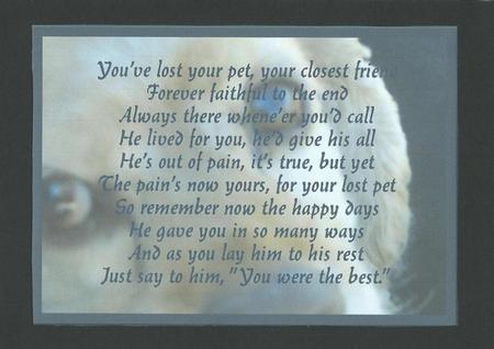 Sympathy, Dog, Male A4 Card in Card Gallery