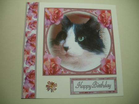 Card Gallery - Black & White cat