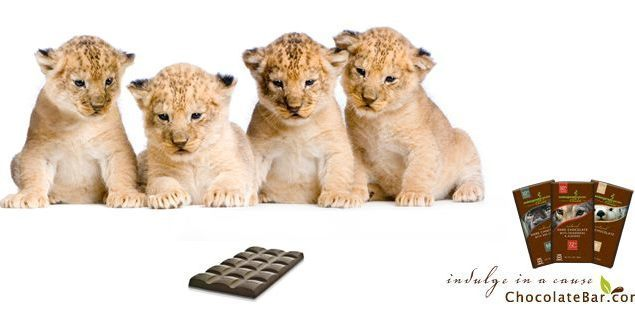 Endangered species chocolate slideshow image
