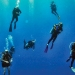 Wet Suits: Scuba diving lawyers