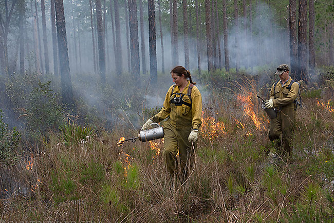 Controlled burn in the Green Swamp