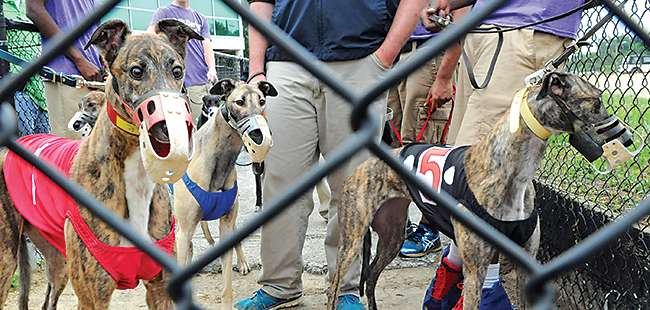 Dogged opposition: Greyhound activists take their fight to Seminole County voters