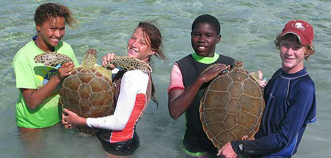 UF, Disney team up to protect butterflies, sea turtles