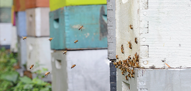 Hive rustlers: Thefts sting Florida beekeepers
