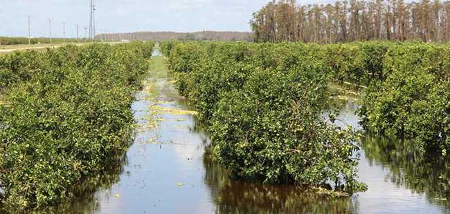 Perseverance a Priority for Florida Farmers Post-Irma